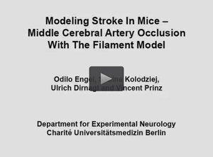 Stroke model in mice.